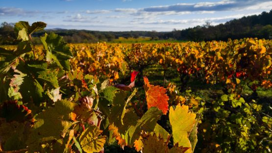 alternance business vin et oenotourisme
